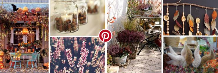 Inspirerende herfstcollage tuincentrum Osdorp Pinterest