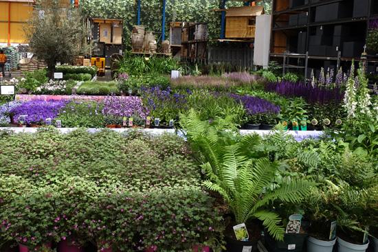 Vaste planten kopen bij tuincentrum Osdorp in Amsterdam