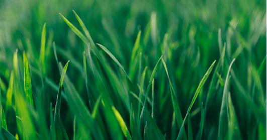 Graszoden leggen in tuin